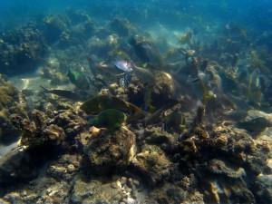 Snorkelling at Ko Ma