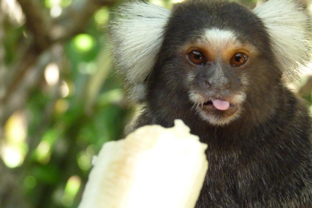 Hotel monkey!